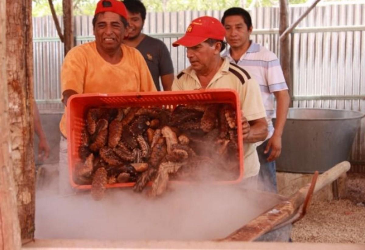 Ponen medidas estrictas para exportar pepino de mar desde Yucatán ...